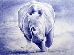 早期临摹的一幅犀牛