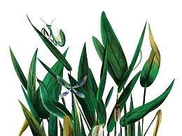"""近期作品整理報告——""""綠""""壹"""
