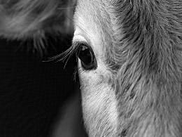 动物肖像系列