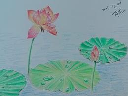 彩铅-花绘