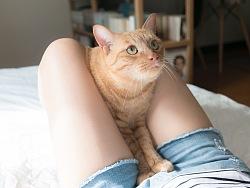 《猫与大腿》