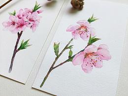 一组水彩手绘 桃花