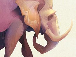 插画设计 大象
