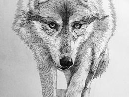 狼像·樱花针管笔