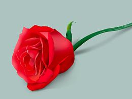 永不褪色的玫瑰