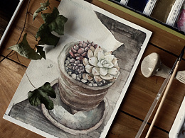 粗陶多肉植物水彩教程