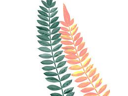 日常植物手绘!