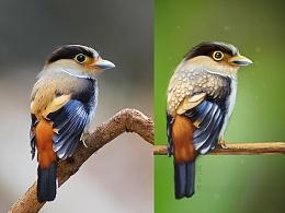每日一画之小鸟