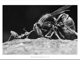 蚂蚁,蜻蜓,大黄蜂之间的事