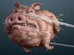 舒克牙线-猪