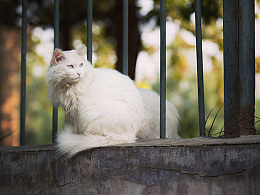 Onescat-克查原创作品【8】Stray cats of Beijing - 1