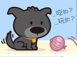 宠物养护常识漫画