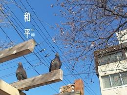 日本游照片配文字