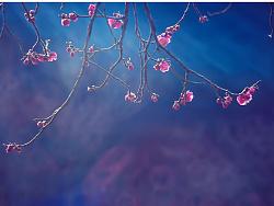 《梅绽孤枝》