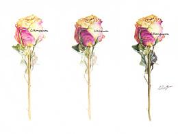 【溶萱手绘】风干玫瑰