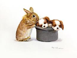 彩铅画《兔与狗》