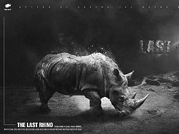 最后的犀牛 <海报>   /The Last Rhino -个人练习