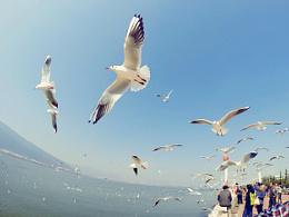 我和海鸥有段情