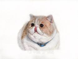 彩铅作品-短毛猫