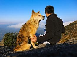爬山狗(单身狗与中华田园犬)