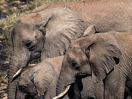 肯尼亚的动物们
