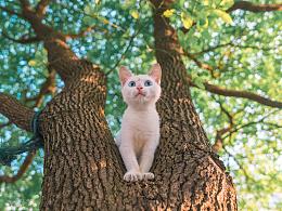 一枚长在树上的喵