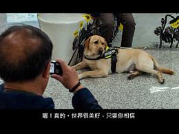 导盲犬法官系列New 7 【稻糕】 宠物摄影 宠物写真 杭州 纪实 拉布拉多