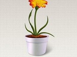 花盆里的花