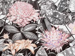 赵娜-《后花园 Backyard garden》-50×100cm-布上铅笔-2016