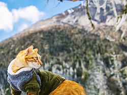 猫咪的雪之旅