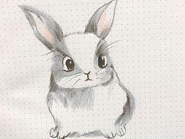 小兔子彩铅画