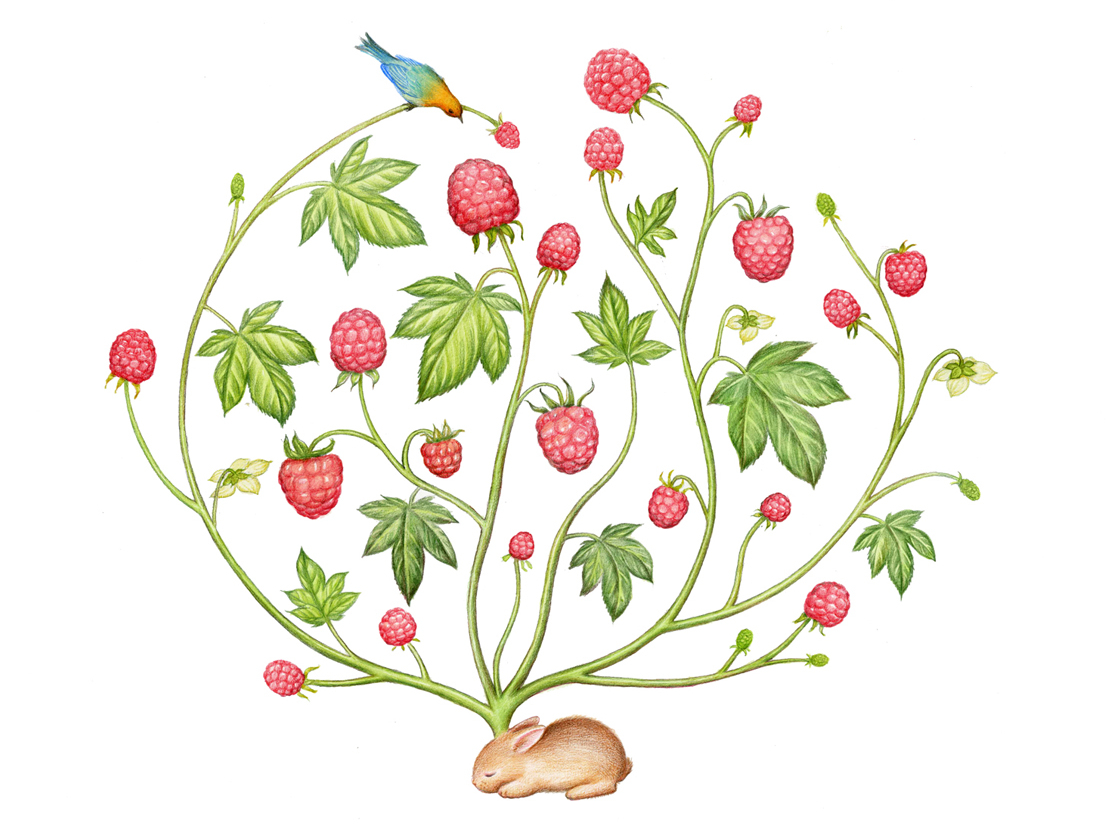 植物面膜广告插图(已商用)图片