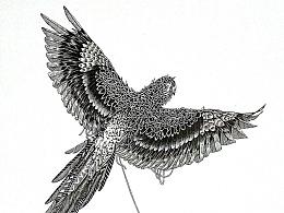 纯线,开脑洞系列—鹦鹉