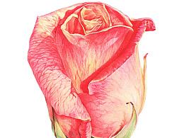 七夕-我们只要玫瑰,不要狗粮!