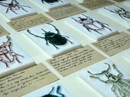 2014.11.16-22.甲虫系列橡皮章