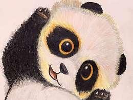 """熊猫""""胖哒"""""""
