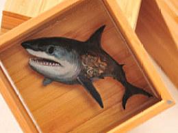 """陈翔颖原创3D树脂画作品机械时代系列之""""深海狂鲨"""""""