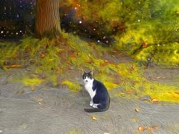 流浪猫王奇幻之旅