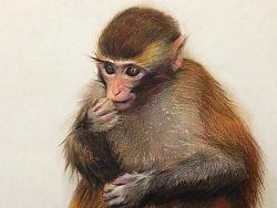 新年快乐,猴年大吉大利,财源滚滚,我的水粉画最后一张是彩铅小猴子。