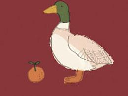 orangeandmallards