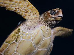 赤蠵龟涂装展示