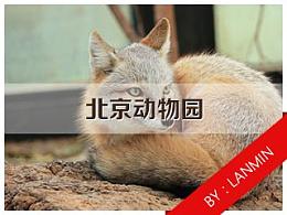 北京动物园走一圈