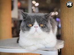 等待你的领养-可爱猫咪