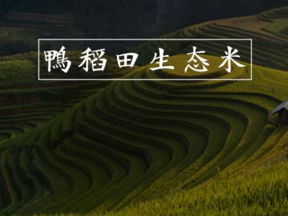 黑龙家鸭稻田生态大米包装设计图片