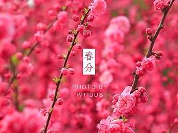 """踏春""""睬""""花"""