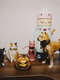 icework 柴犬和猫