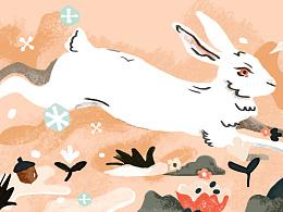 练习-兔子君