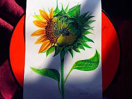 撸支向日葵