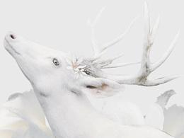 [White Deer白鹿]