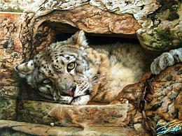 《窗外》--雪豹
